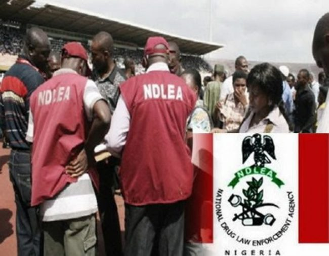 NDLEA Officials